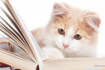 cat-reading-book.jpg